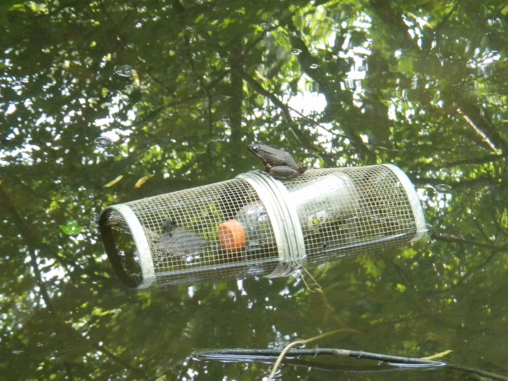 Minnow Trap with Floating Bottle
