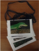Picture Cards Lizard Curriculum
