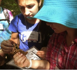 Students examine a crayfish, as they begin to contemplate food chains and energy flow dynamics of local streams.