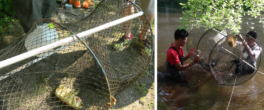 In the picture to the left, the bait bucket is the half-gallon milk jug on the bottom and the trap mouth can also be seen to the right of the trap. The picture to the right shows the trap being placed in the water, it is important to tie the trap to a tree or solid structure around the bank.