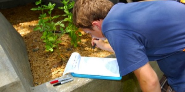 A student carefully recording the location for the captured anole. The student will record the GPS coordinates on the data sheet and use flagging tape to mark the capture location. GPS coordinates will also be written on the flagging tape.